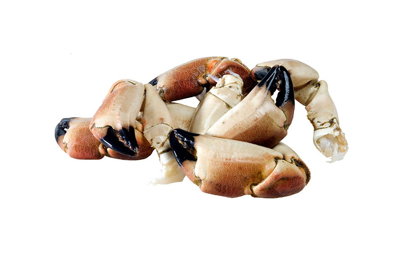 Brown Crab claws