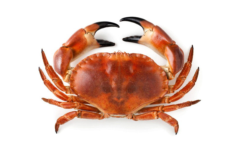 Brown Crab whole